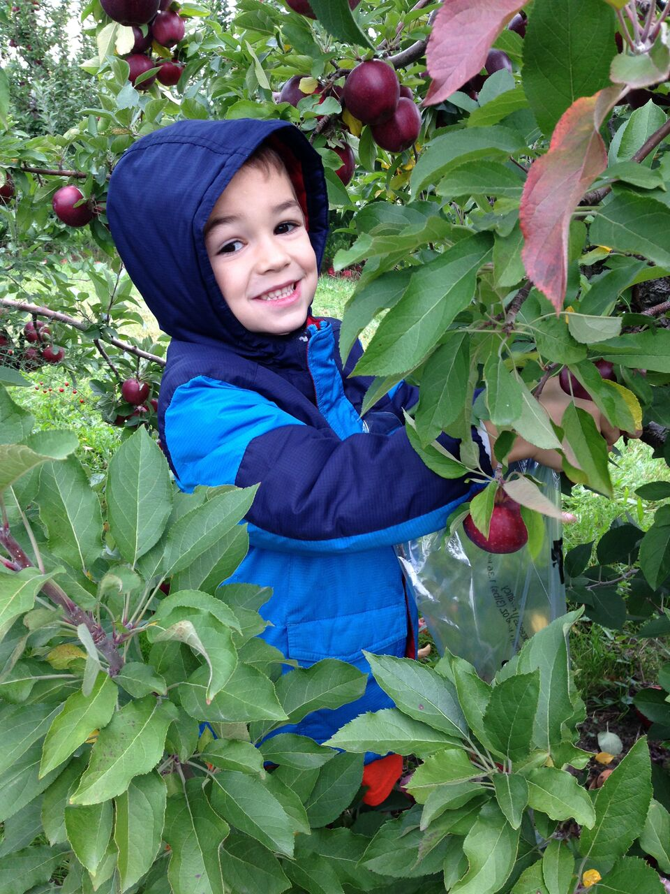 Elementary students visit the Apple Orchard.